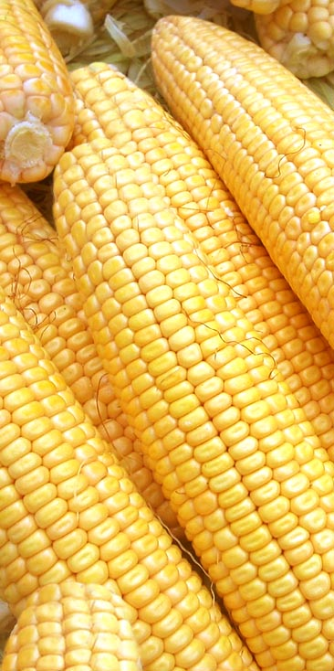 Benefits and many transform of corn.